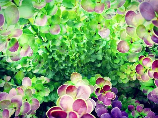 Bild von grünen und roten Blumen
